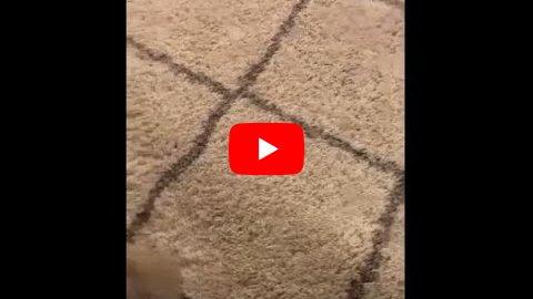 niespodzianka-w-dywanie