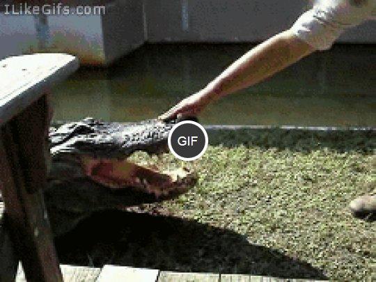 sztuczka-z-krokodylem